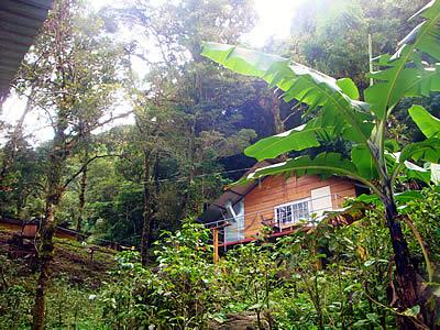 Unterkunft im Cloud Forrest